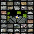 Flower Against Stones by mrthink