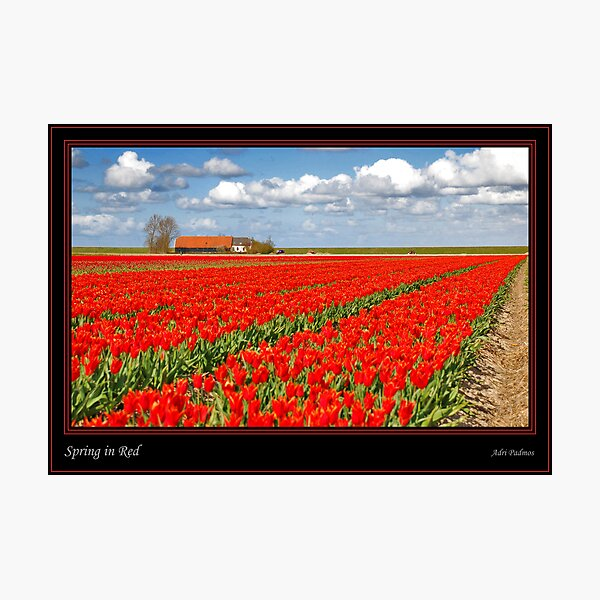 Spring in Red Photographic Print