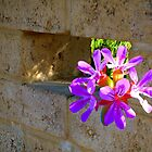 A Wall Flower Collage by TeAnne