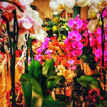 Orchids in the Market by OliviaHathaway