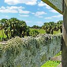 mossy fence by cliffordc1