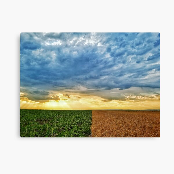 Sunset and clouds over the crops Canvas Print