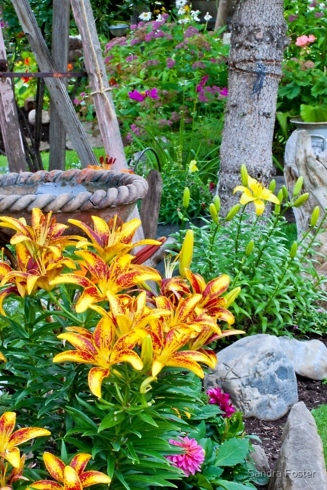 Lily Garden Scene by Sandra Foster