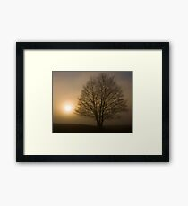 Foggy tree in East Yorkshire Framed Print