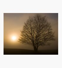 Foggy tree in East Yorkshire Photographic Print