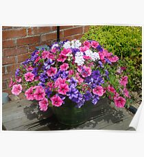 Basket of Petunias Poster
