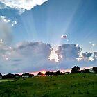 Evening Rays  by trisha22
