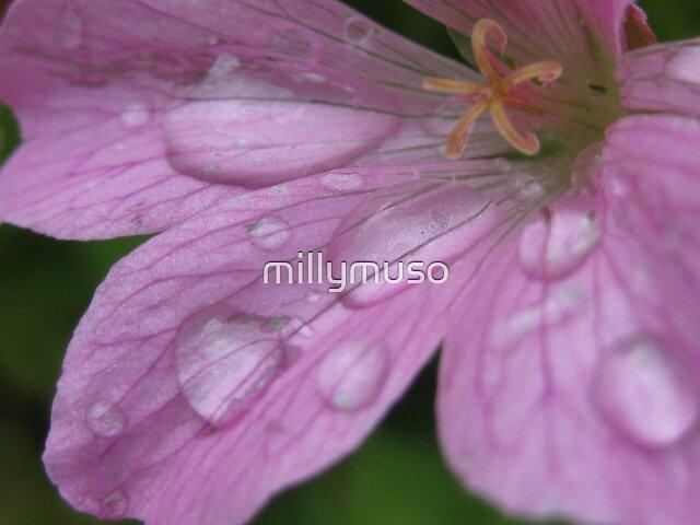 splash pink by millymuso