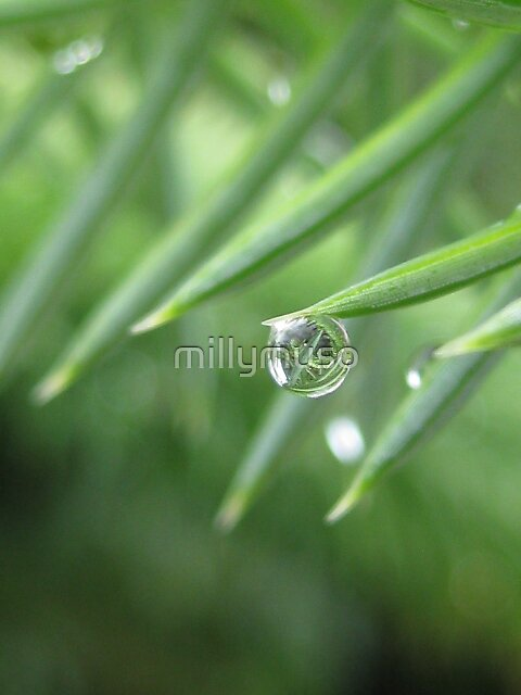 teardrop on the wire by millymuso