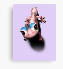Knob tailed Gecko Canvas Print