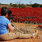 Red Centre. by Santalum