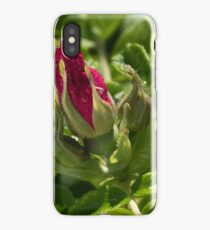 Branch of Briar With Flower With Water Drops iPhone Case