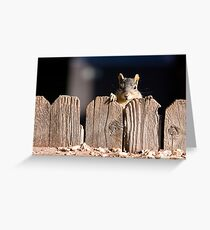 Squirrel on the fence Greeting Card