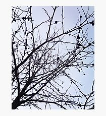Branches on Sky Photographic Print