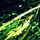 Droplets by MRPhotography