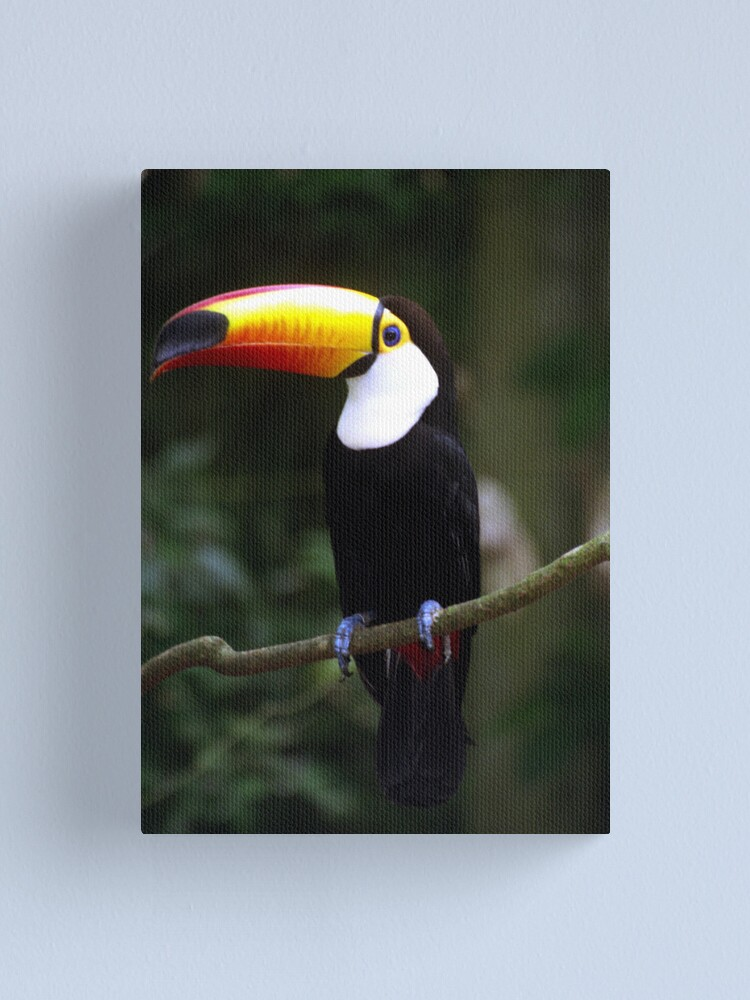 Alternate view of Toucan Canvas Print