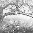 The Magic Tree by Heidi Stewart