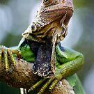 Iguana by Wayne Gerard Trotman