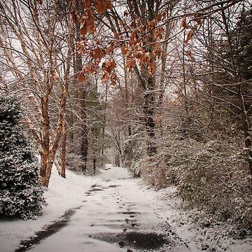 Snowy Walking Path by RoseC