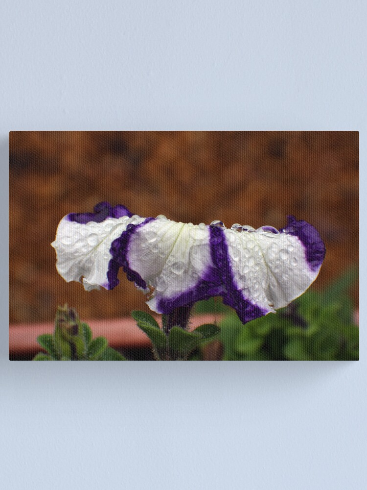 Alternate view of Wet Striped Petunia Canvas Print