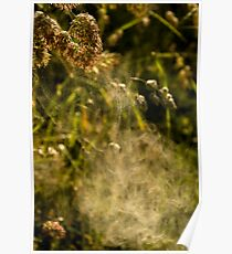Pollen Eruption Poster