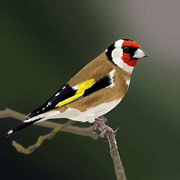 Goldfinch by Penguin86