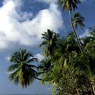 Tobago by Wayne Gerard Trotman