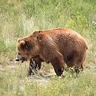 Grizzly Bear by Kathleen Brant