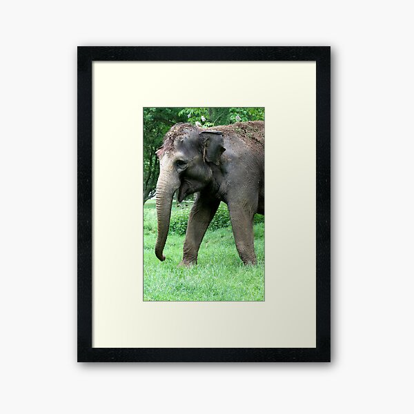 THAI ELEPHANTS THAILAND WILD BEAUTIFUL WALL POSTER ART PICTURE PRINT LARGE HUGE