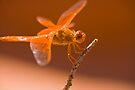 Orange You Gonna Smile by photosbyflood