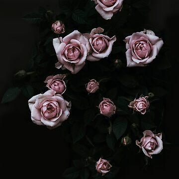 Velvet Rose Pink by Ingz