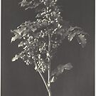 plant by adrienne75