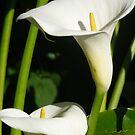 Lily 2 by WhiteDiamond