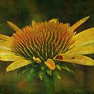 Cone Flower with Ladybug by Bonnie T.  Barry