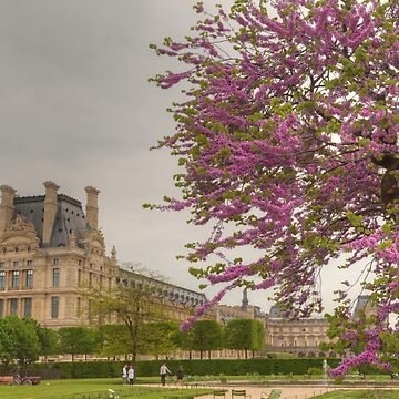 Spring Beauty In Paris by Michaelm43