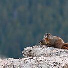 Marmot Pair by Gary Lengyel