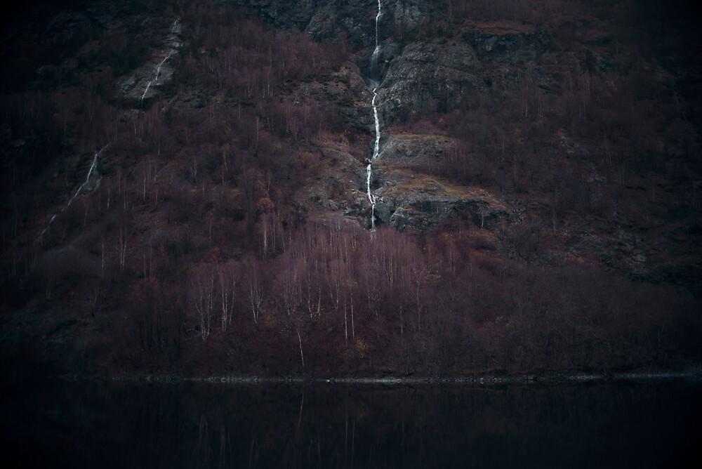 Purple forest by josemanuelerre