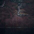 Purpurroter Wald von josemanuelerre