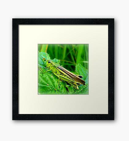 Grasshopper Framed Print