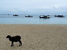 Sheep on the shore by vfphoto