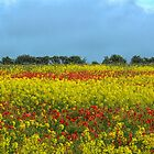 Reds and Yellows by Viv Thompson