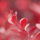 Sunshine on Reds by Tracy Friesen