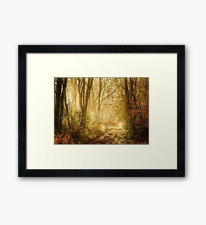 Light To My Path Framed Print