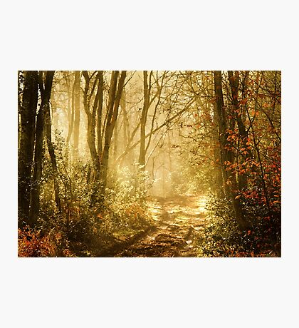 Light To My Path Photographic Print