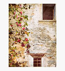 Camelia flowers and decayed house Photographic Print