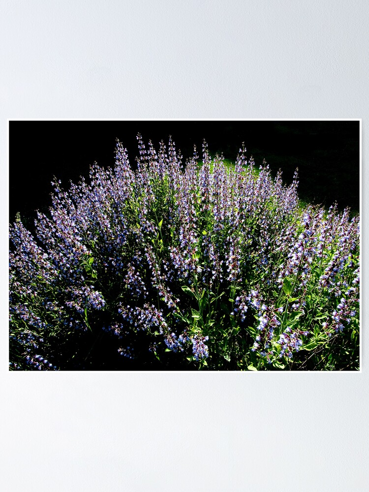 Alternate view of Purple Profusion Poster