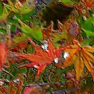 Japanese maple  by medley