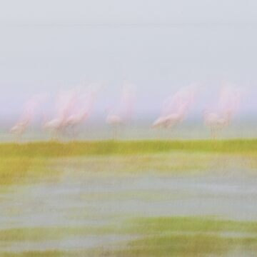 Pink and green hues nature abstract of pink flamingos in wetland Namibia. by brians101