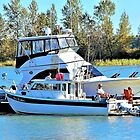 Fin Seeker - Steveston Harbour, BC Canada by Lesliebc