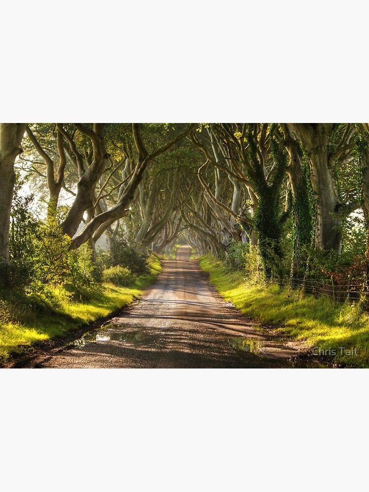 The Dark Hedges by christait